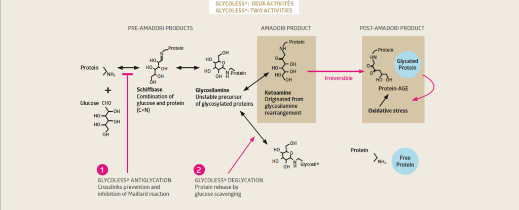 Molecular ageing of proteins